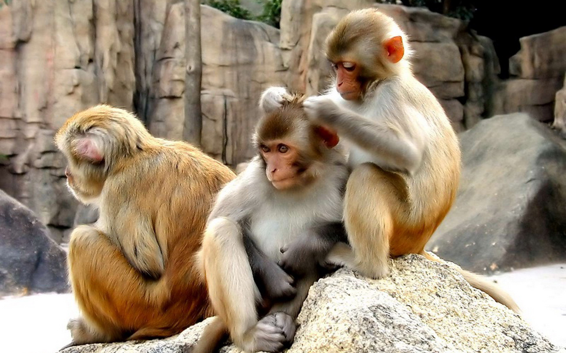 Monyet Mencari Kutu Traders Forum Learning Center